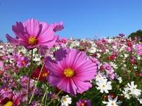 Miel Bio Fleurs Sauvages 400 g  Pot de 400 g
