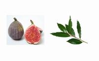 Confiture de figues aux feuilles de laurier 200 g  pot de 200 g