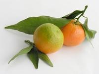 Confiture d'oranges amères 350 g  Pot de 350 g