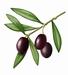 Délices d'Olives 180 g Pot de 170 g